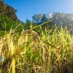 FAO: Agriculture in the context of World Population and Food Security